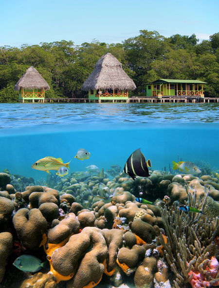 bocas del toro tierra verde tours Activities